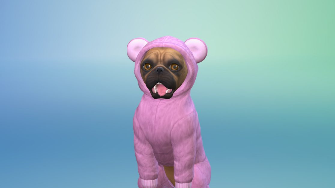 Take On The Create Your Pet Challenge!